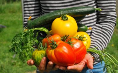 Verdure dell'Orto di Casa Ilaria – come ordinarle